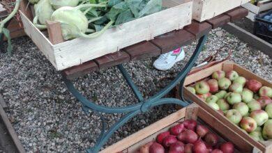 Photo of Ekologiczne smakołyki czekają na Was!